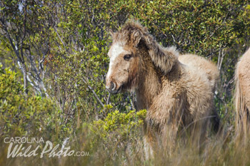 Cute yearling at Rachel Carson Reserve