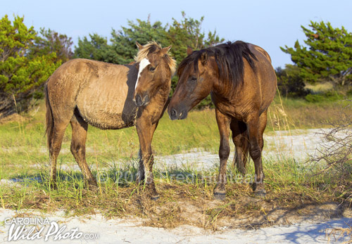 A mare with her yearling.