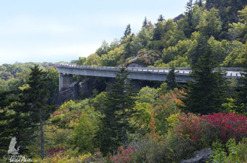 The Linn Cove Viaduct had a spattering of color