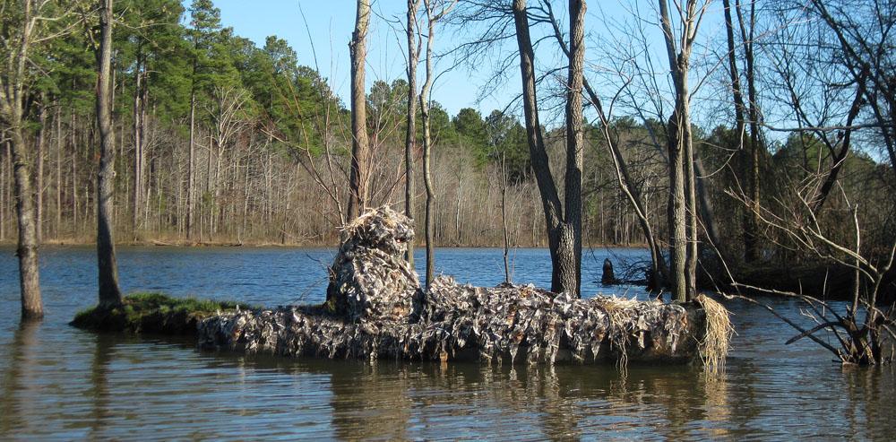 Carolina Wild Photo Equipment Notes